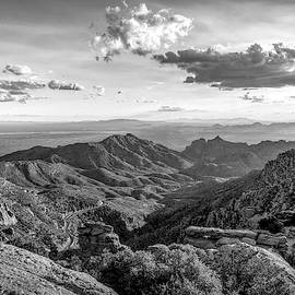 Catalina Overlook, Black and White by Catherine Pearson