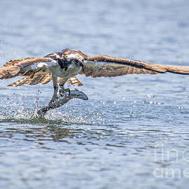 Catch Of The Day by Craig Leaper