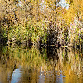 Cattail Beauty by Cathy Franklin
