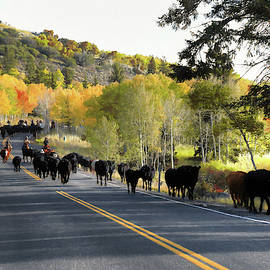 Cattle Drive Round Up by Donna Kennedy