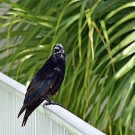 Catwalk Crow by William Tasker