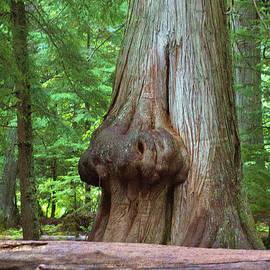 Cedar Burl-5139 by Gary Gingrich Galleries