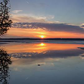 Cedar Tree Sunset by Ron Wiltse