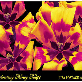 Celebrating Fancy Tulips Stamp by Claudia O'Brien