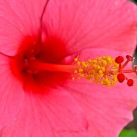 Celebratory Flower by Sonali Gangane