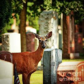 Cemetery Deer by Lenore Locken
