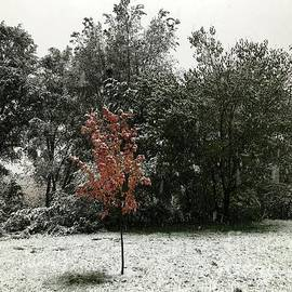 Shea Eden - Changing seasons