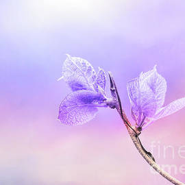 Charming Baby Leaves in Purple by Anita Pollak