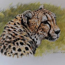 Cheetah Watercolour Portrait by Alan M Hunt