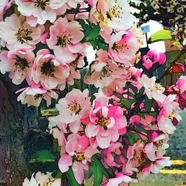 Cherry Blossom in Watercolor 3 by Loretta S