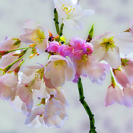Cherry Blossoms Digital Painting by Gene Norris