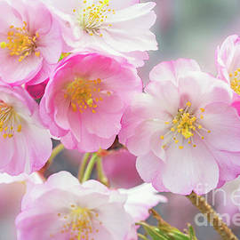 Cherry Blossoms Pink on Pink by Regina Geoghan