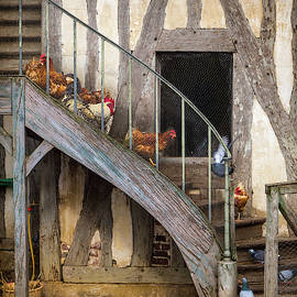 Chickens of Versailles by Morey Gers