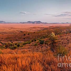 Chihuahua Desert Twilight Glow - Davis Mountains State Park - Fort Davis West Texas by Silvio Ligutti