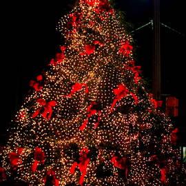 Cynthia Guinn - Christmas In Calabash