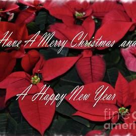 Sandra Huston - Christmas Poinsettias