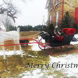 Christmas Sleigh by Claire Bull