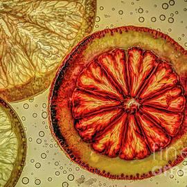 Citrus Light by Roger Monahan