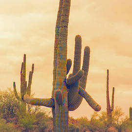 Classic Arizona Giant Saguaro by James BO Insogna