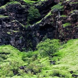Cliff side Makaha by Craig Wood