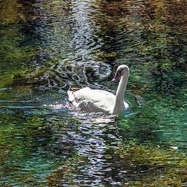 Dimitris Sivyllis - Clitumno swan