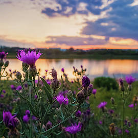 Close up of wild, purple shrub flowers blooming in the meadow ne by Psycho Shadow
