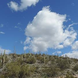 Clouds and Cacti by Bill Tomsa
