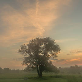 Clouds and Tree at Dawn by Jeff Oates Photography