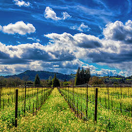 Clouds Over Sonoma Vineyards by Garry Gay