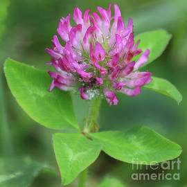 Clover in Dew, miniature by Banyan Ranch Studios