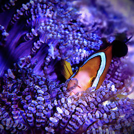 Clownfish and Anenome by Christina Ford