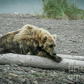 Coastal Brown Bear by Webb Canepa