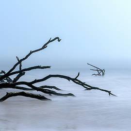 Coastal Drift Wood by Tom Singleton