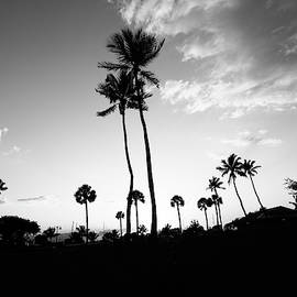 Coconut Palms in BW by Garrick Besterwitch