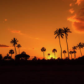 Coconut Palms Silhouette by Garrick Besterwitch
