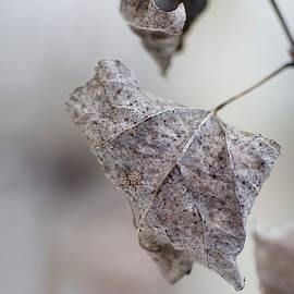 Cold Leaf by Greg Hayhoe
