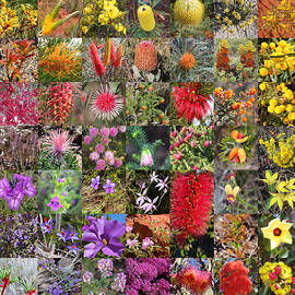 Collage of Australian wildflowers by Ines Porada