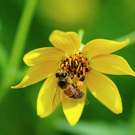 Collecting Pollen by Bill Morgenstern