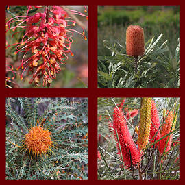 Collection of Australian Proteaceae flowers by Ines Porada