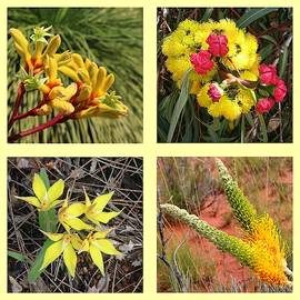 Collection of Australian wildflowers in yellow by Ines Porada