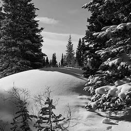 Cascade Colors - Colorado Winter Black and White Landscape