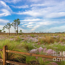 Colored Grasses by Tom Claud