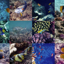 Colorful And Exotic Red Sea Underwater Collage by Johanna Hurmerinta
