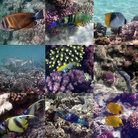 Colorful And Exotic Underwater Sealife Collage by Johanna Hurmerinta