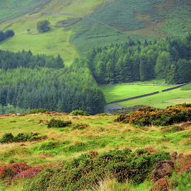 Colorful Autumn in Wicklow. Valley by Jenny Rainbow