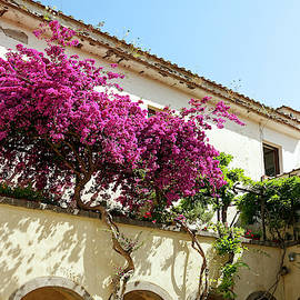 Colorful Bougainvillea by Sally Weigand