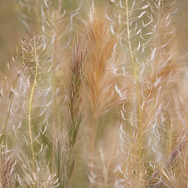 Colorful Grasses by Leda Robertson