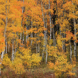 Colorful Idaho Forest by Leland D Howard