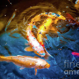 Colorful Koi by Colleen Kammerer