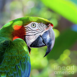 Liesl Walsh - Colorful Parrot in Bright Sunlight 2